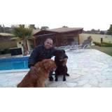 adestramento cachorro Alphaville