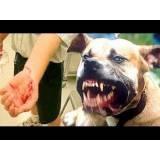 adestramento cachorros bravos Bela Vista