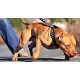 adestramento de cachorro selvagens preço Barueri