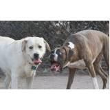 adestramento de cachorro selvagens Butantã