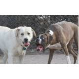 adestramento de cachorro selvagens Lapa