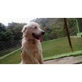 adestramento de cachorro Alphaville
