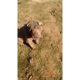 adestramento de cachorros bravos Higienópolis
