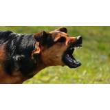 adestramento de cachorros selvagens Rio Pequeno