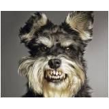 adestrador de cachorros bravos
