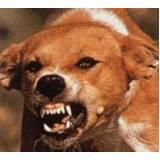 adestramento de cães raivoso