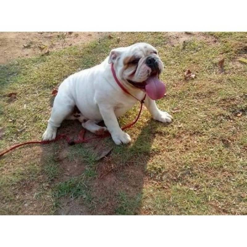 adestramento de cães bravos Osasco