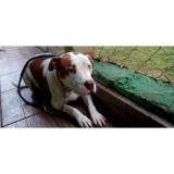 adestramento de cães em SP Cotia