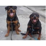 adestramento de cães policiais Bom Retiro