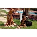 adestramento de cães preço sp Higienópolis