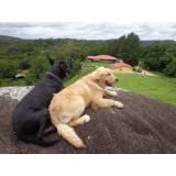adestramento de cães que latem muito Butantã
