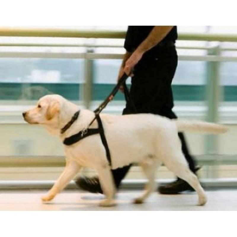 adestramento de cão farejador Aldeia da serra -