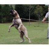 adestramento de cão preço Rio Pequeno
