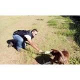 adestramento de cão sp Carapicuíba