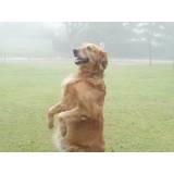 adestramento de cão Bela Vista