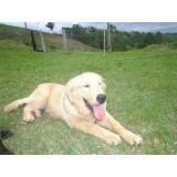 adestramento para cachorro quanto custa Bom Retiro