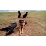 adestramento para cachorros Cotia