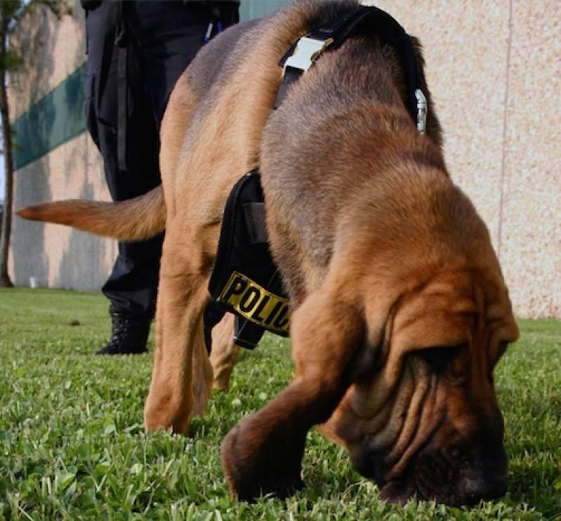 adestramentos avançados para cães Alphaville