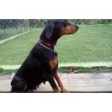 adestramentos cachorro quanto custa Aldeia da serra -