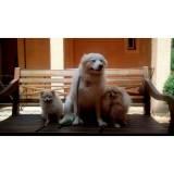 adestramentos cachorro Alphaville