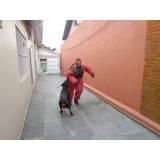 adestramentos cão Bom Retiro