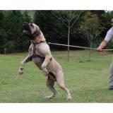 adestramento de cachorros