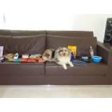 adestradora de cães