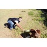 adestramento para cão