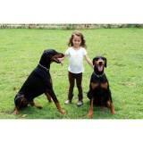 adestramentos de cães valor Vila Olímpia