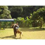 adestramentos para cachorro valor Barueri