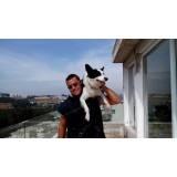 alugar cachorro segurança Cotia