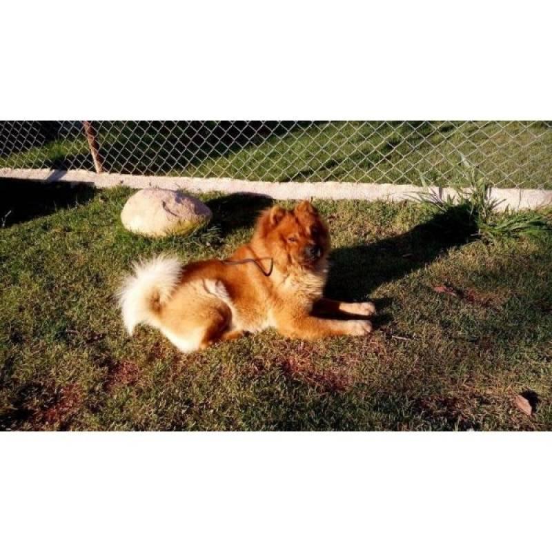 cão de guarda para alugar