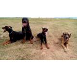 aluguel de cães de guarda em SP Barueri