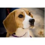 aluguel de cães de guarda Alphaville