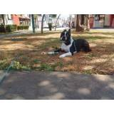 aluguel de cão de guarda em São Paulo Alto da Lapa