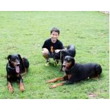 aluguel de cão guarda Higienópolis
