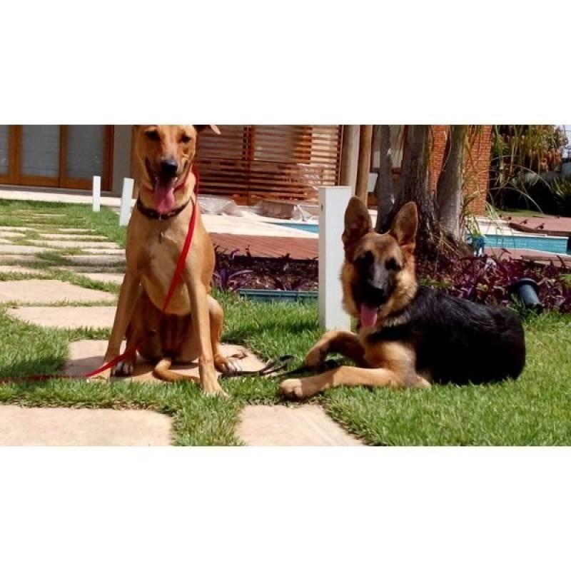 busco por adestrar cão medroso Rio Pequeno