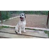 cachorro de aluguel Aldeia da serra -