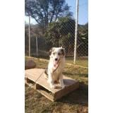 cachorro de segurança para locação Bom Retiro