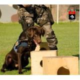 cães de faro de explosivos