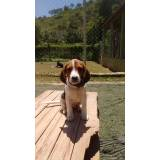 cães farejadores no Brasil