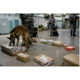 cão farejador drogas