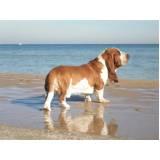 empresa de faro para cães perdidos