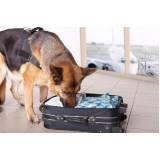 treinar um cachorro farejador