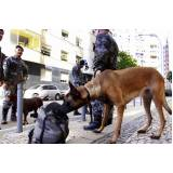 cães de faro de explosivos preço Alphaville