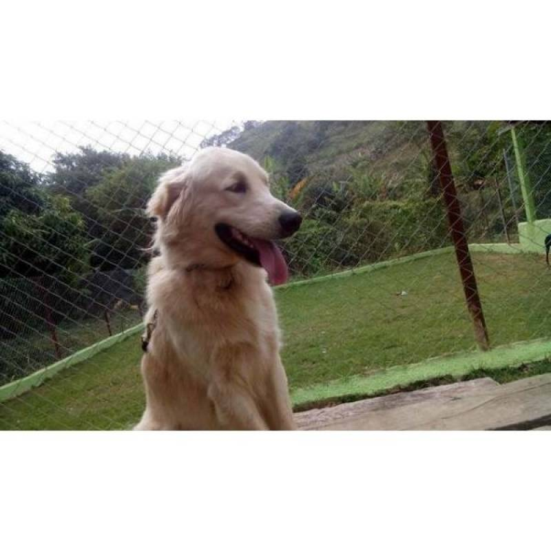 cães de guarda para aluguel preço Santana de Parnaíba