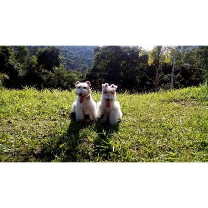 cães de guarda para aluguel Raposo Tavares