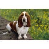 cães farejadores de animais Aldeia da serra -