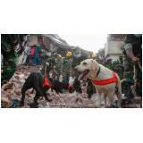 cães farejadores de pessoas perdidas Alto da Lapa