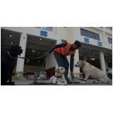 cães farejadores de pessoas preço Higienópolis